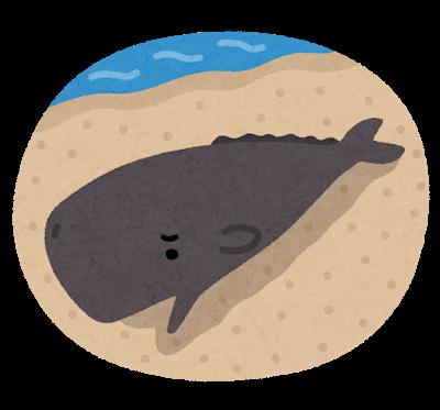 鯨が食えるぞ!日本が商業捕鯨再開