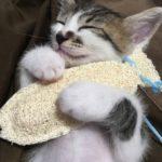 「抱き枕のメリット5つ」抱き枕で病気を回避できる理由とは